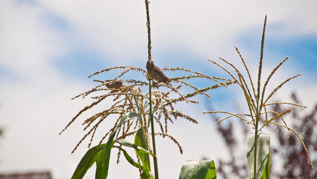 Réseaux agro-environnementaux